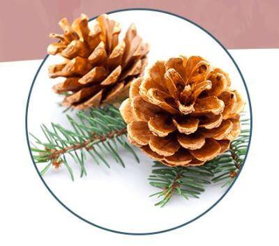 Enzogenol Pine Bark Extract