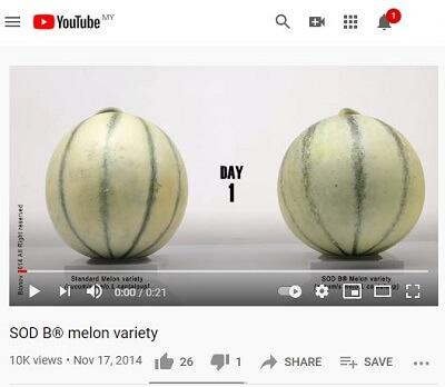 Melon comparison